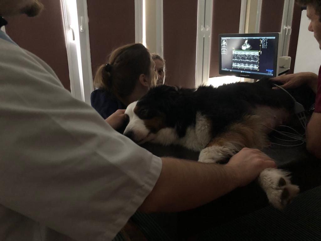 badanie ultrasonografem weterynaryjnym VINNO E20